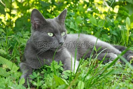 graue katze liegt auf dem gras