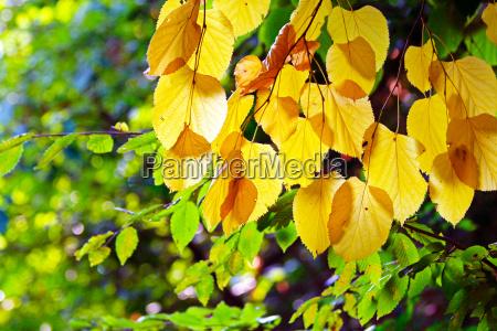 blatt baumblatt getrocknet abgetrocknet laub natur