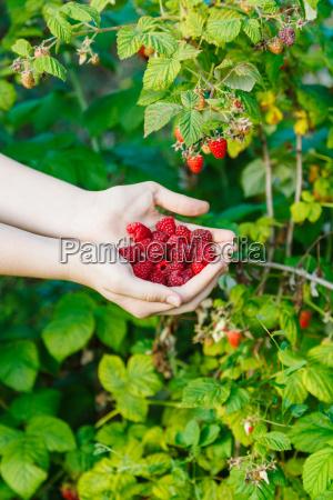 pfluecken abpfluecken hand garten sommer sommerlich