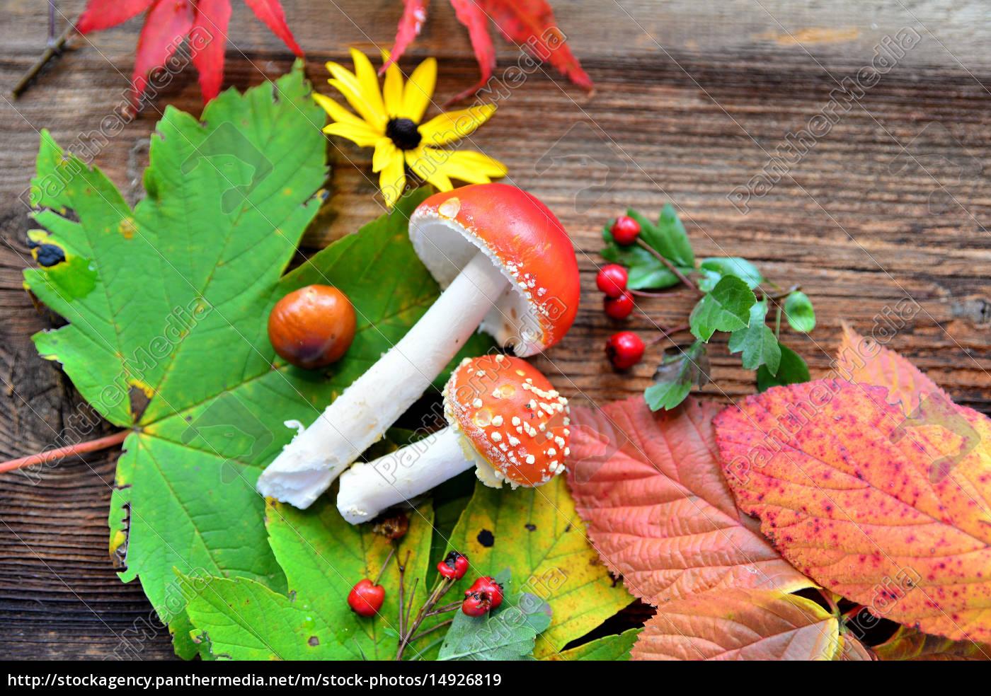 Herbst Hintergrund Lizenzfreies Bild 14926819 Bildagentur