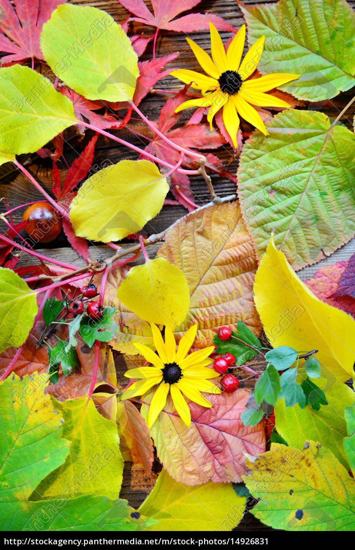 Herbst Hintergrund Lizenzfreies Bild 14926831 Bildagentur