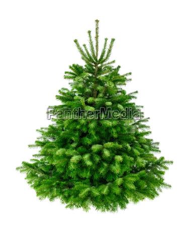perfect dense fir