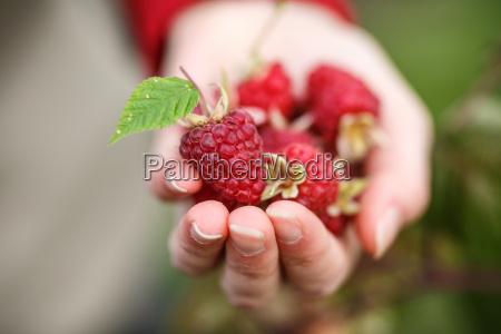 raspberry kommissionierung
