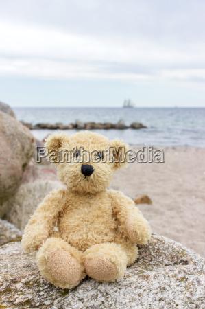 a teddy bear sits on a