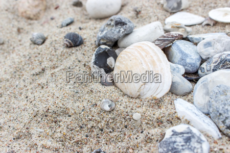 shells and stones on the sandy