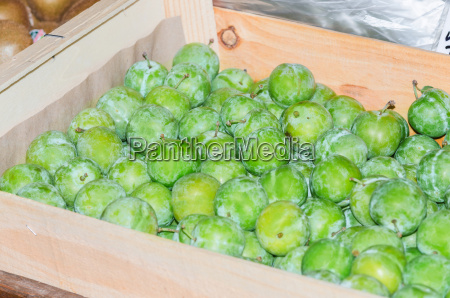 fresh green plum fruit