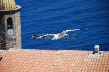 seagull over catelsardo cathedral sant antonio