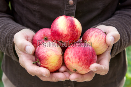 hand holding red apples