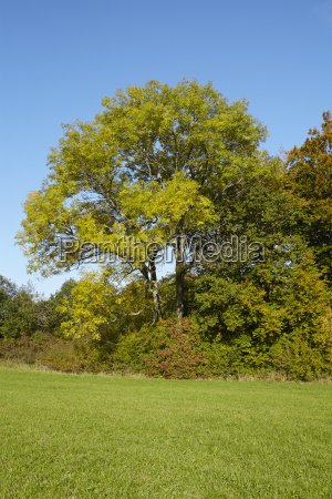 autumn trees at the edge of
