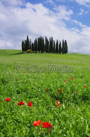 toskana wald tuscany forest 13