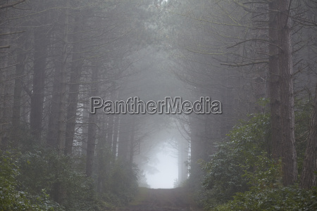 amrum germany forest at fog