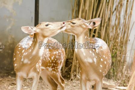 braun braeunlich bruenett tierpark thailand braune