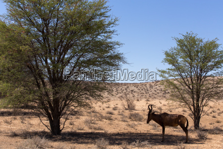wild afrika wildlife