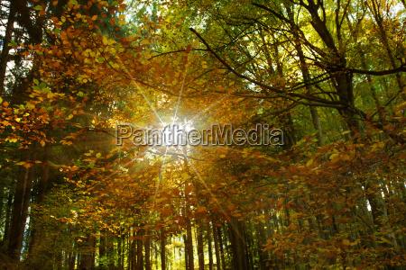 gegenlicht im laubwald