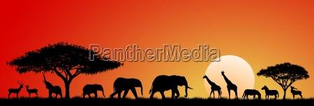 tiere der savanne