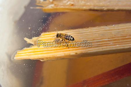 insekt landwirtschaft ackerbau pollen bienenstand bluetenstaub