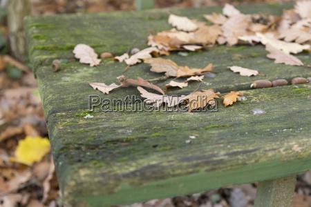 blaetter auf alter sitzbank