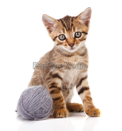 striped kitten with gray ball