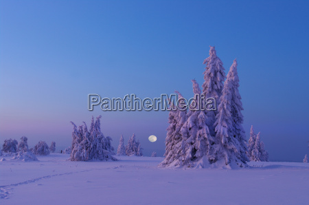 snowy pines on the kahler asten