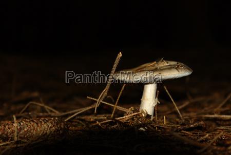 pilz auf waldboden