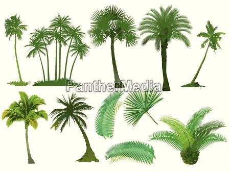 palmen baeume