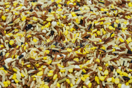 much grain rice