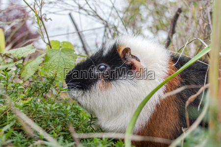 a guinea pig sitting in the