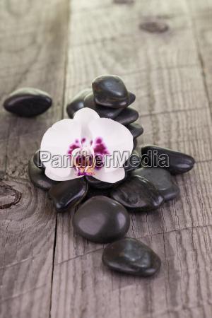 weisse motte orchidee und schwarze steine