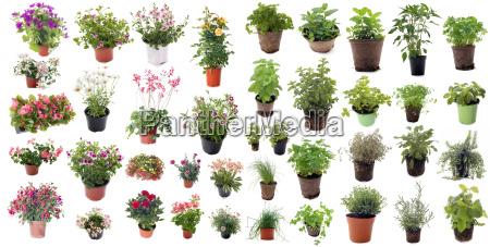 aromatischen kraeutern und bluetenpflanzen