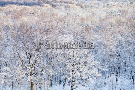 schneeeichen die von sonne im wald