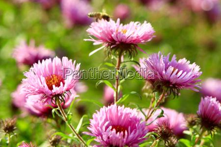 garten insekt blume pflanze gewaechs nektar