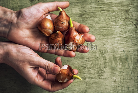 hands with the bulbs
