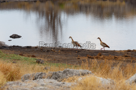 tier afrika wildlife safari landschaftsbild landschaft