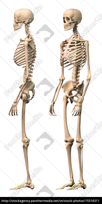 Berühmt Malvorlagen Zum Thema Menschliches Skelett Fotos - Druckbare ...