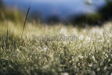 landschaft in der sierra nevada