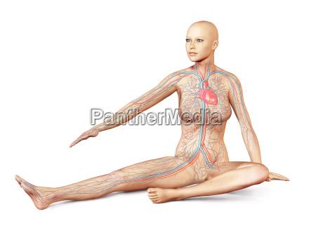 female naked body sitting in dynamic