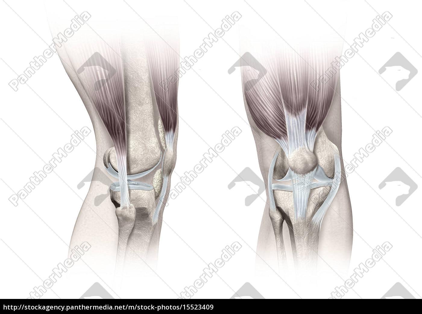 Ziemlich Antworten Auf Anatomie Und Physiologie Färbung Arbeitsmappe ...