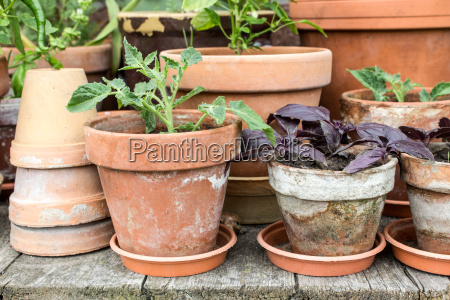 flowerpots with vegetables plants