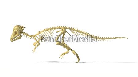 pachycephalosaurus dinosaurier voller fotorealistische skelett wissenschaftlich