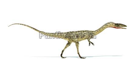 coelophysis dinosaurier fotorealistische darstellung auf weissem
