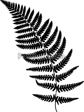 fern frond black silhouette vector illustration