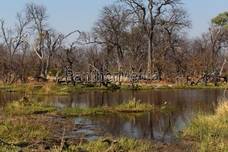 moremi wildreservat landschaft