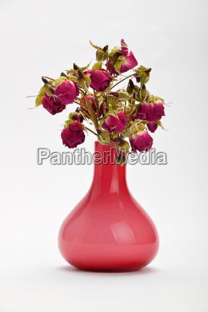 getrocknete rote rosen in rosa vase