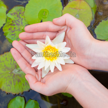 frauenhaende lotosblume haelt