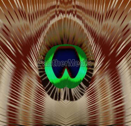 vogel auge oculus ophthalmos organ federn