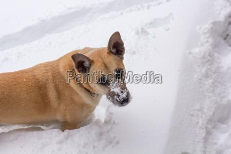 mit winni im tiefen schnee