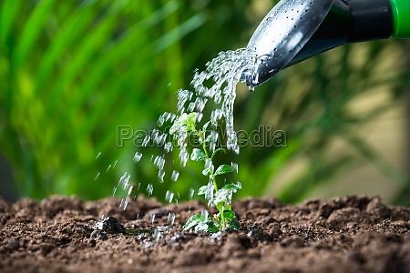 wasser fuer pflanzen vom can gegossen