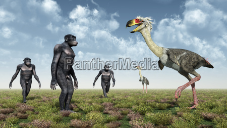 homo habilis und der terrorvogel phorusrhacos