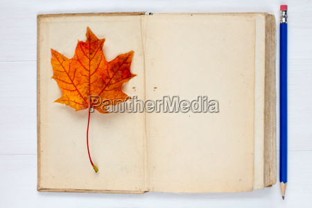 autumn concept with book and fall