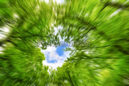 baum baeume himmel unscharf baumbestand abstrakt